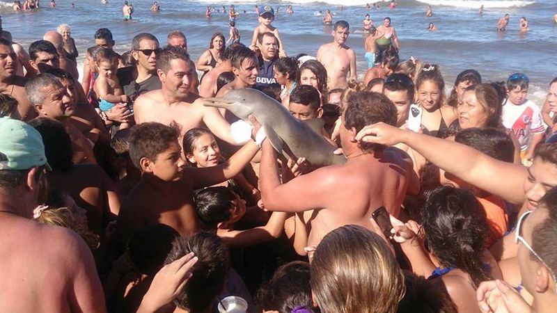 Dolfijn sterft door teveel selfies